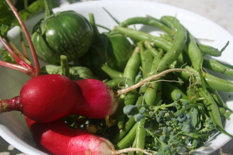 radishes, lao green stripe eggplants, green beans and broccoli