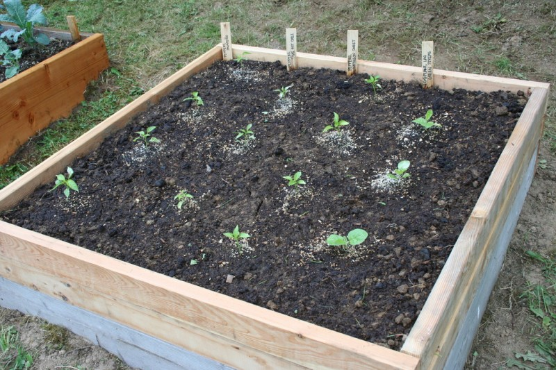 four by four foot bed with peppers and eggplants in it