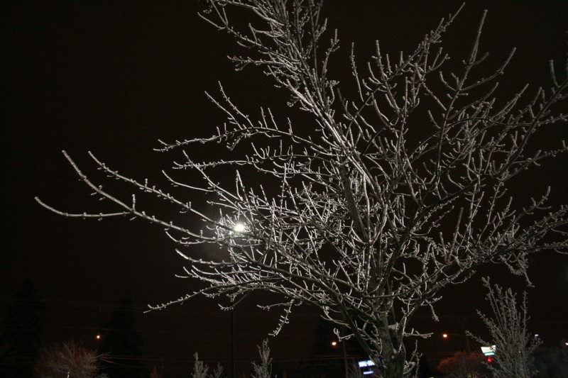 An Ice-Covered Tree Glowing with Backlight
