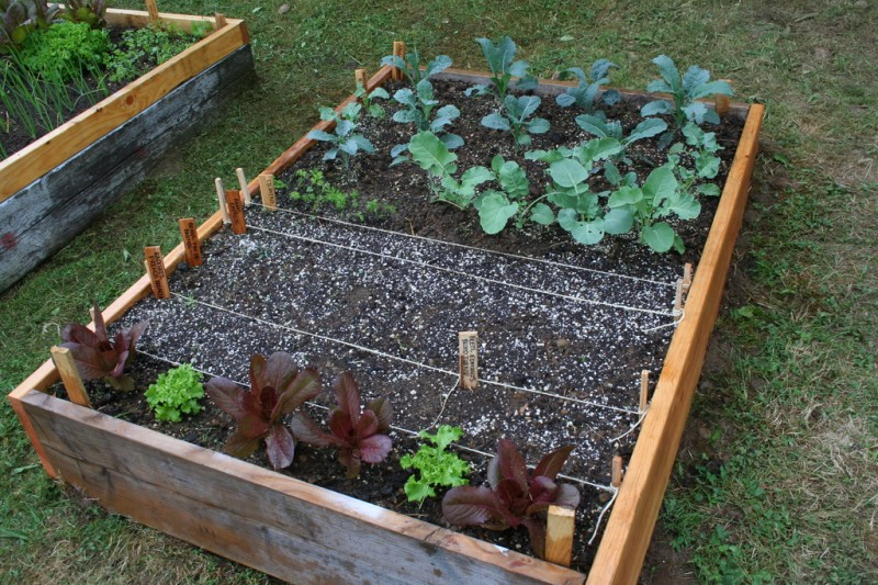 the third bed planted with various vegetables