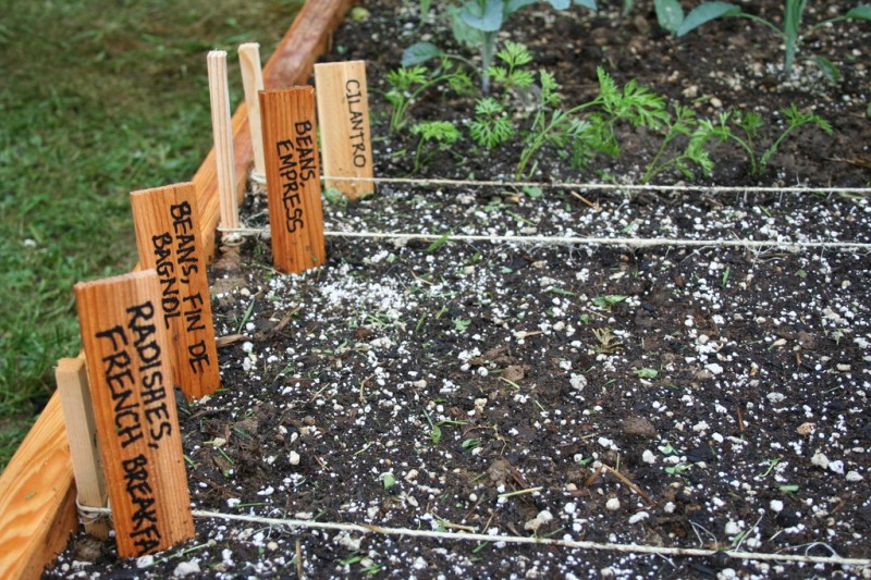 signs for the vegetables i just sowed seeds for