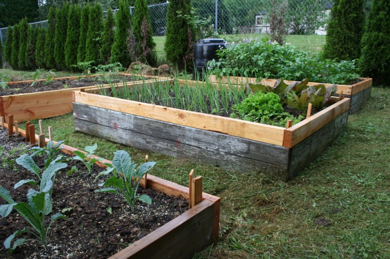 some of the raised beds