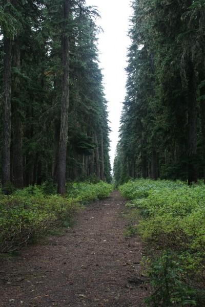 Straight wide trail with forest on each side