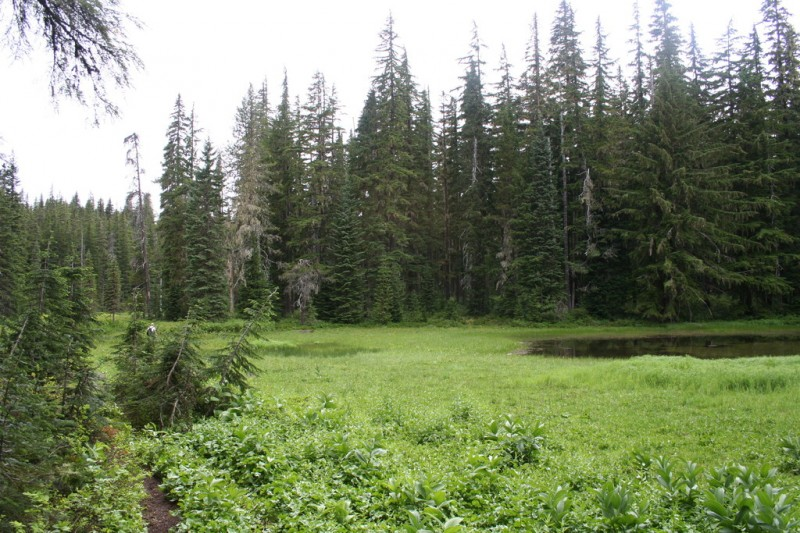 Cache Meadow, trail on the left, swampy pond on the right