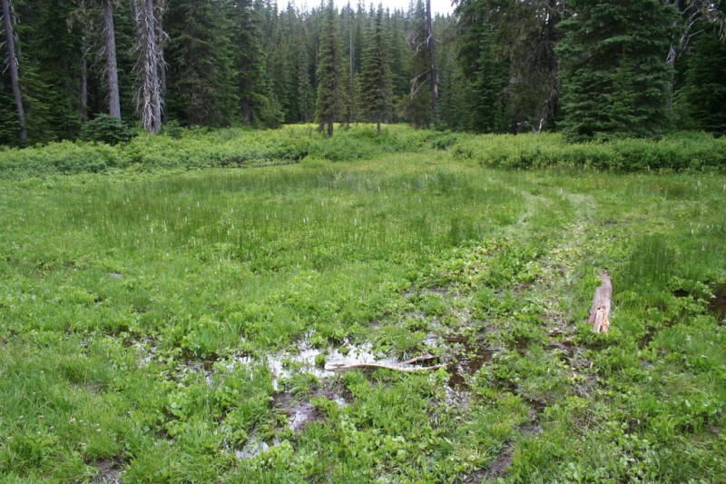 The swampy trail through Cache Meadow