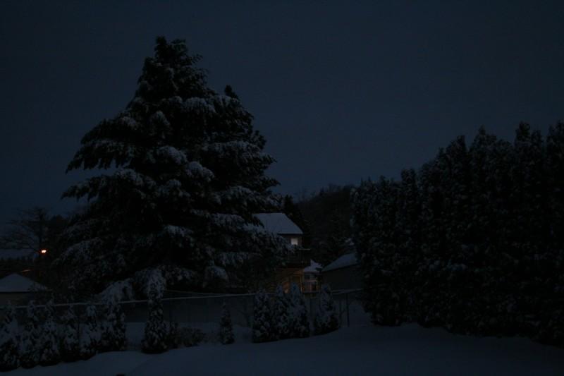 Big Tree and Arborvidaes in the Neighbors' Yards