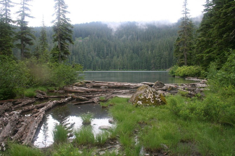 Serene Lake with bunched up logs in the foreground