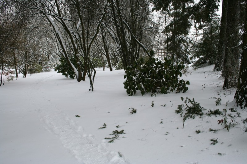 A Snow-Covered Path