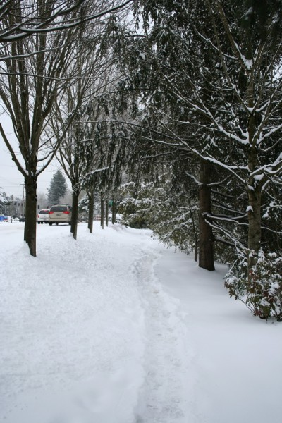 The Snow-Covered Path