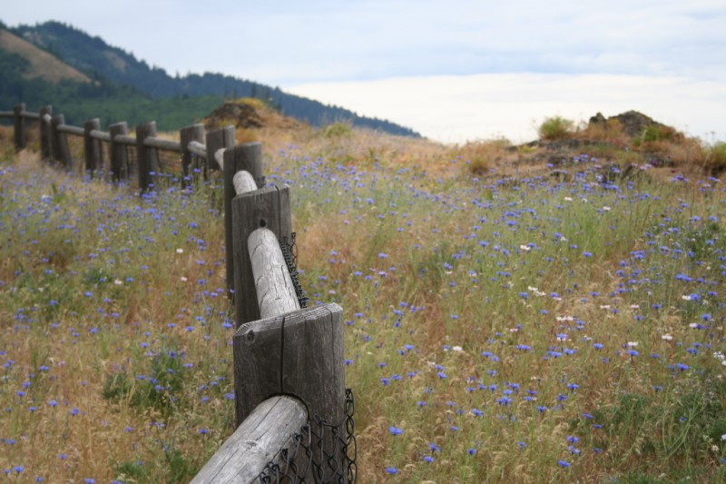 Wildflowers and Fenceposts