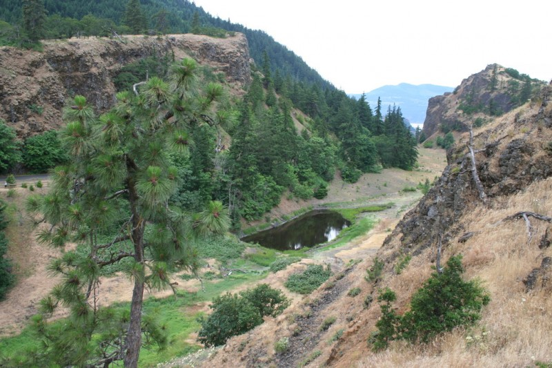 Tree and Pond in a Valley
