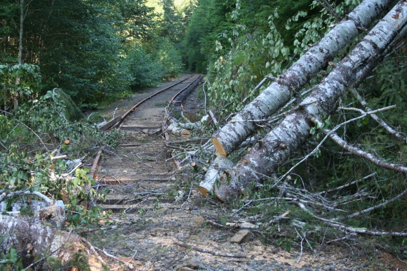 Debris and big trees down on the track