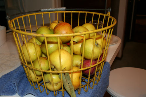 Basket of Apples From The Farm