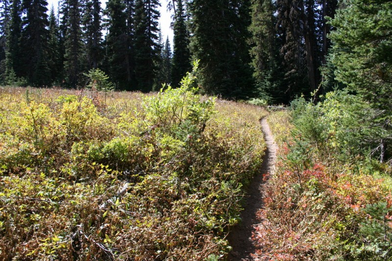 Trail On The Edge of the Meadows