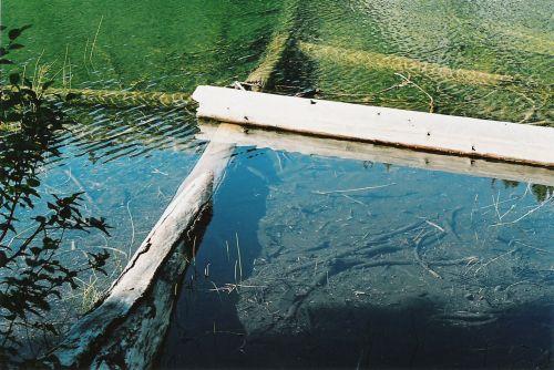 Logs in Thorp Lake