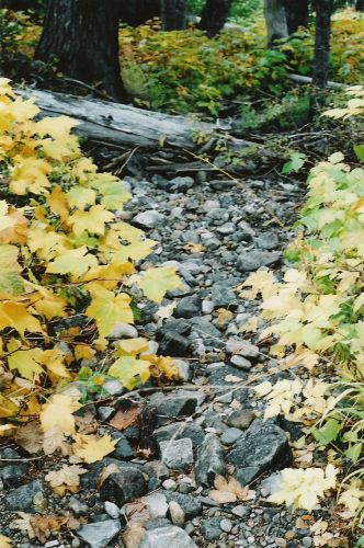 Yellow Leaves Surrounding The Trail
