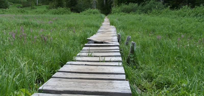 Wooden bridge over swampy ground