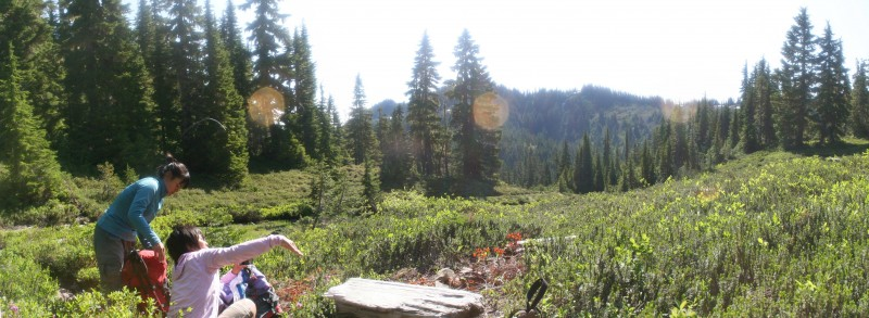 Sunny meadow panorama