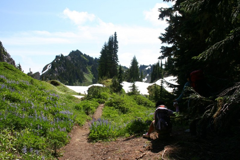 Trail surrounded by wildflowers with some snow and a mountain peak in the distance