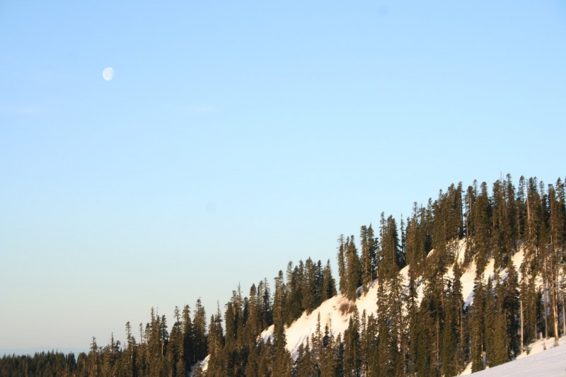 the moon above a snowy and forested hillside